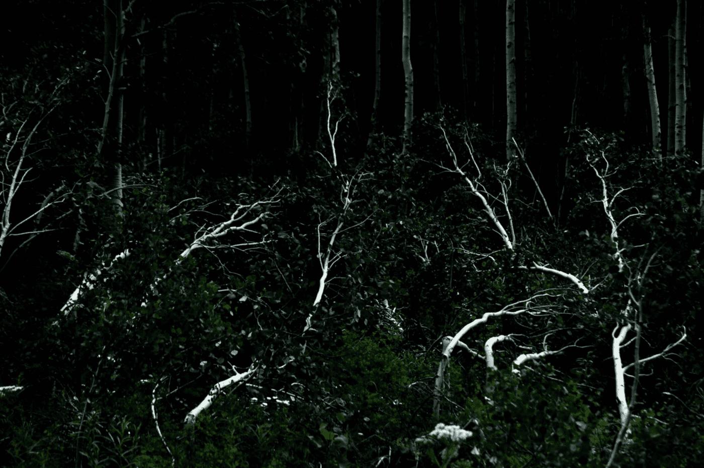 Retrato de un árbol es una mucndkelsofgdg