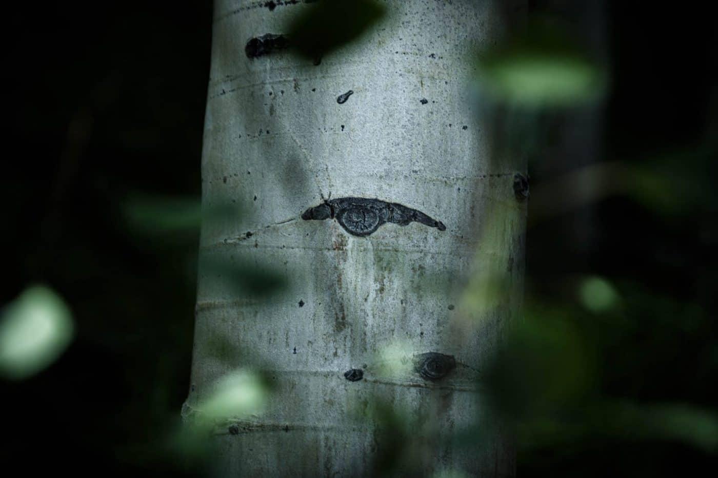 Retrato de un arbol / Portrait of a tree. Wimblu