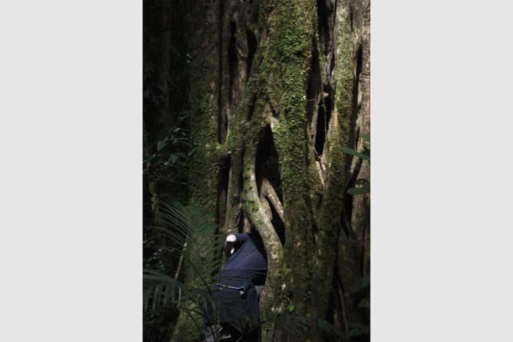 Reserva biológica bosque nuboso de Monteverde, Puntarenas, Costa Rica.