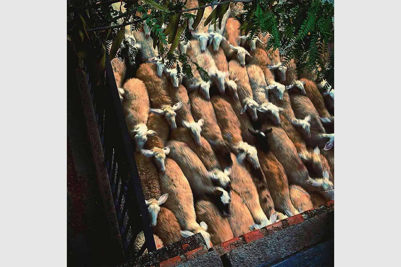 Trabajando desde el balcón de la casa. Pobla de Segur, España. Francesca Franceschi.