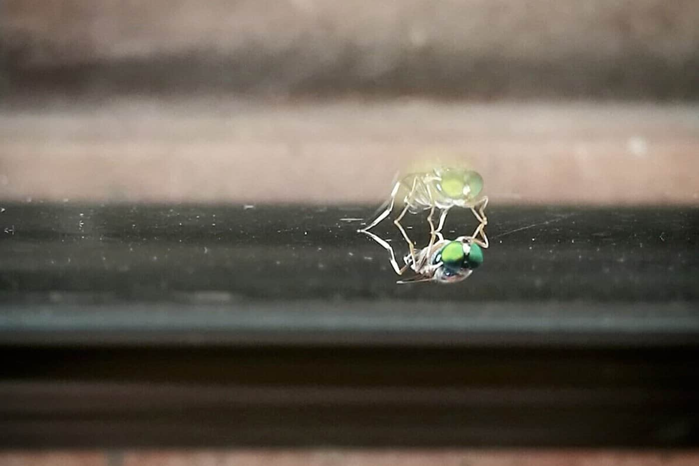 Foto tomada en la ventana de mi estudio de diseño. Rebeca Chang.